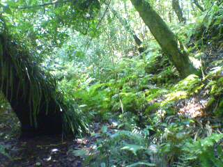 父島のジャングル